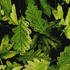 Kanvas Nature Walk Forest Foliage - leaf Green main