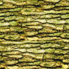 Kanvas Nature Walk Bark Texture - Light Moss main